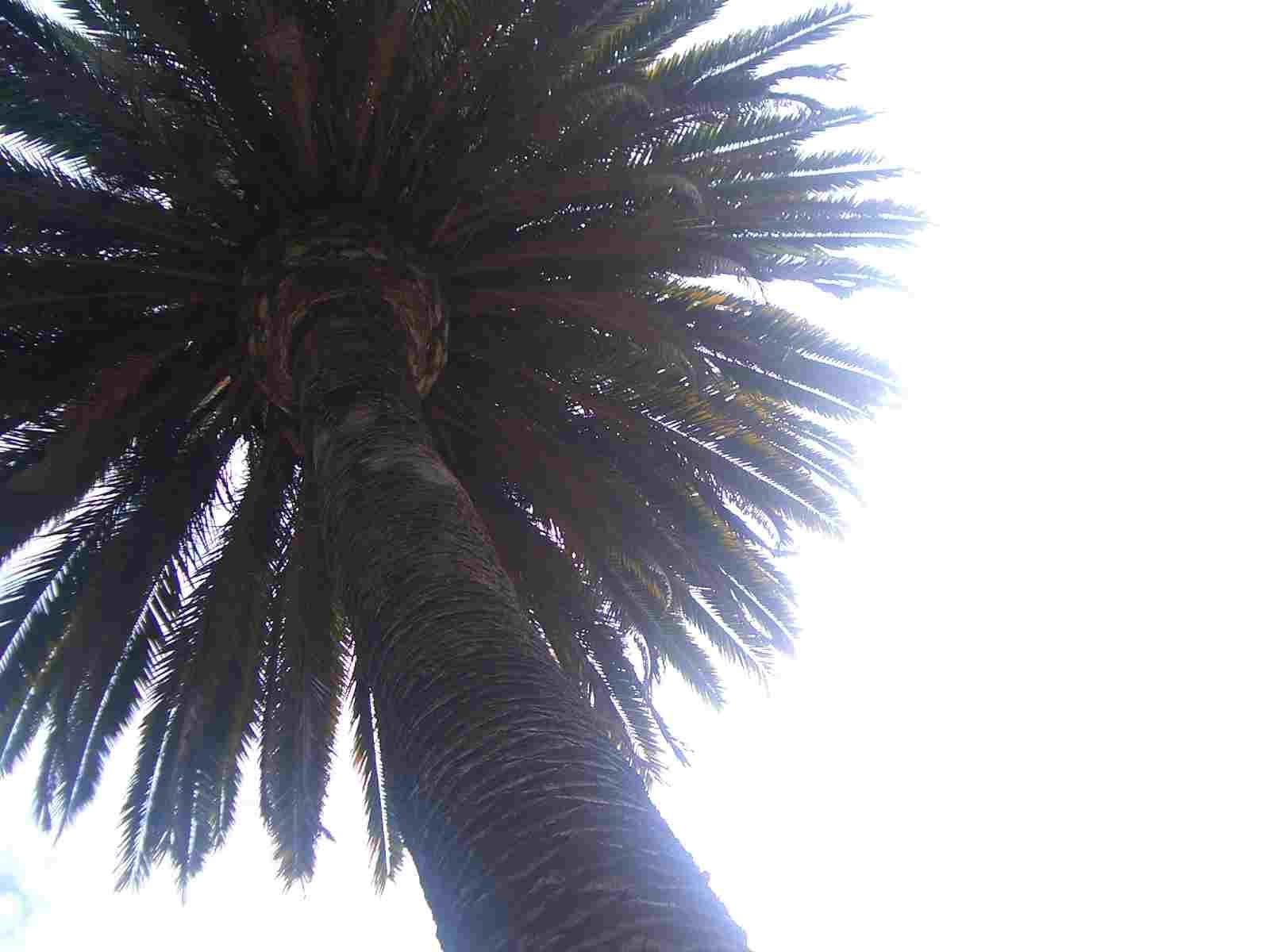 palm tree2.jpg